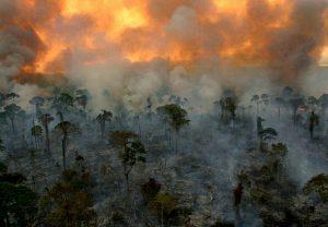 hiệu ứng nhà kính gây cháy rừng