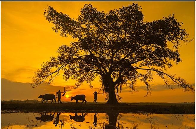 Bức tranh thôn quê khi người dân Quảng Bình đi làm đồng