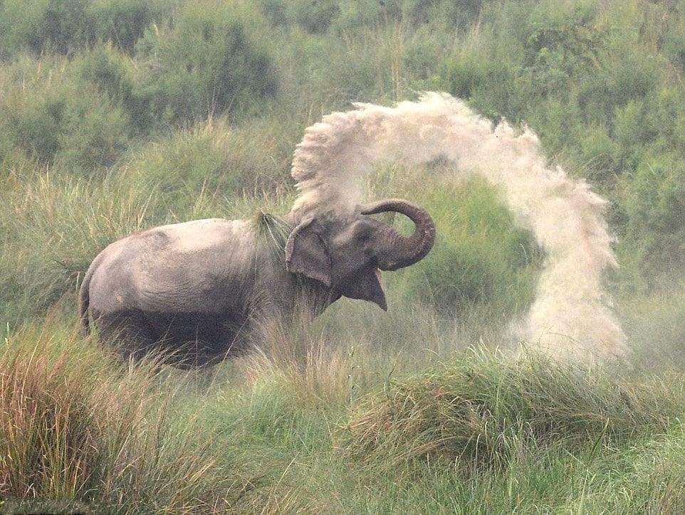 Chú voi phun cát lên người để giảm nóng
