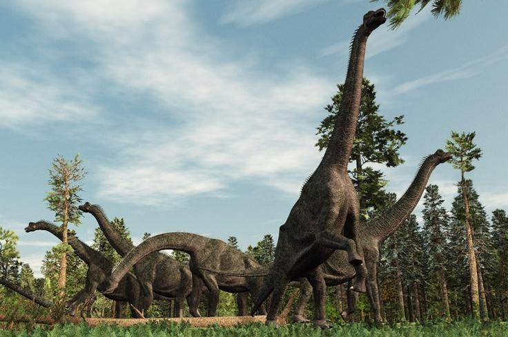 Khủng long ăn thực vật Ornithischia
