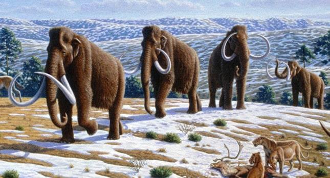 Mammoth khổng lồ