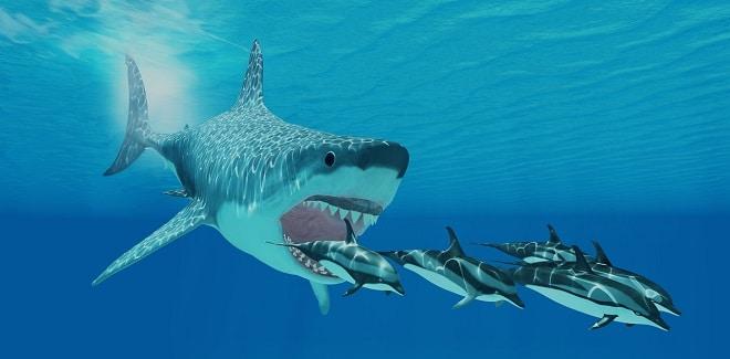 Siêu cá mập