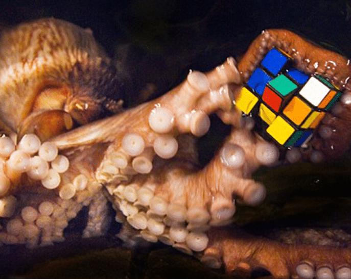Thiên tài của đại dương