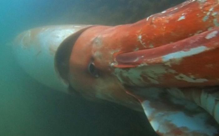 Quái vật biển khơi