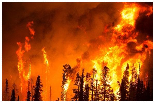 """Thảm họa cháy rừng Amazon phá hủy """"lá phổi xanh"""" của thế giới"""