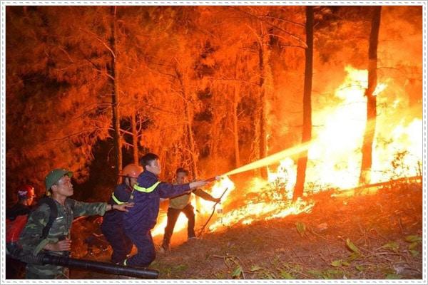 Việt Nam cũng là nạn nhân của cháy rừng