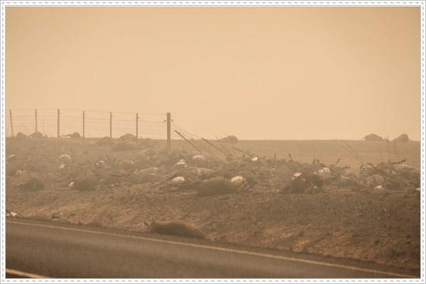 Hơn nửa tỷ sinh vật sống bị thiêu rụi trong cháy rừng ở Úc
