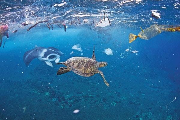 Chung tay bảo vệ đại dương xanh sạch