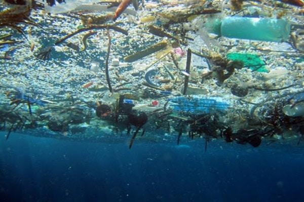Hậu quả nặng nề mà ô nhiễm đại dương gây ra