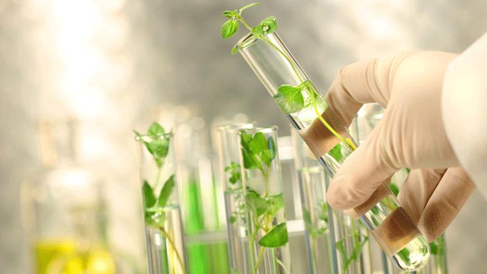 Khoa học môi trường là gì?