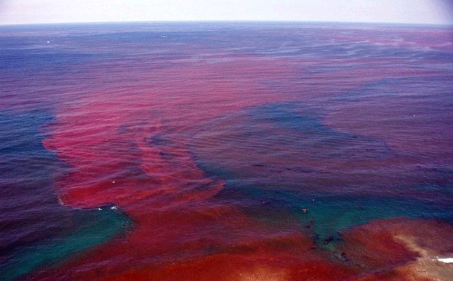 Thuỷ triều đỏ là gì?